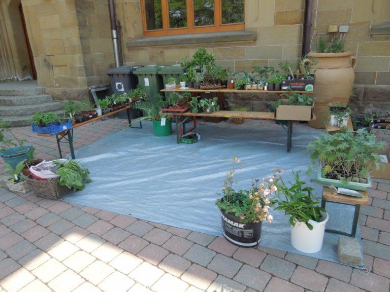 Die ersten Pflanzen warten auf Tauschwillige