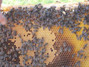 Die Bienen sind schon fleißig.