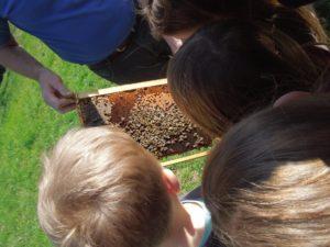 Ein Bienenvolk aus der Nähe.