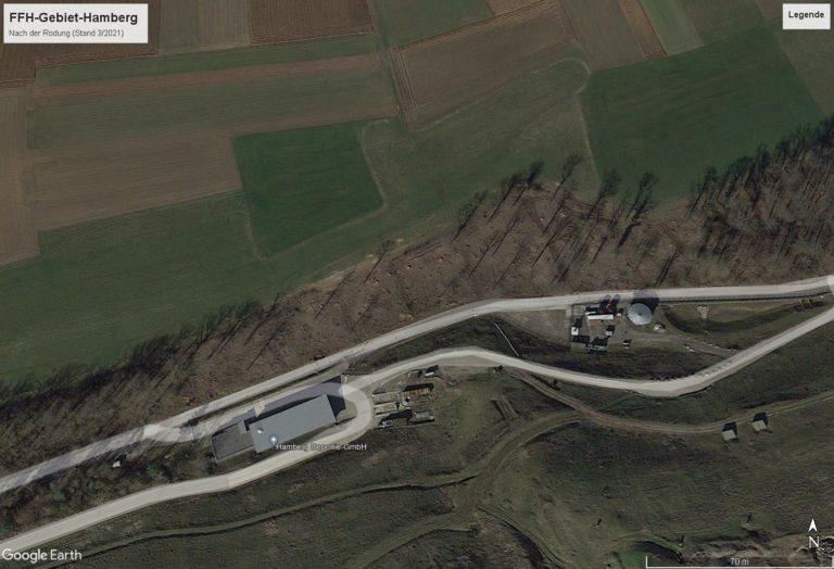 Satellitenbild FFH-Gebiet Hamberg nach der Rodung (Quelle Google Earth Pro)