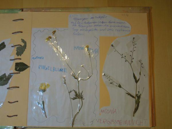 """Naturtagebuch 2007 - """"Rund um das Studentenbrünnele"""""""